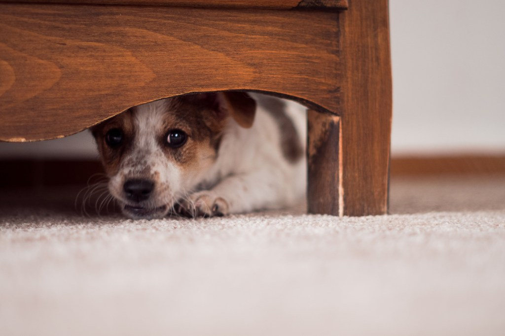 Für viele Hunde ist der Lärm am Silvesterabend ein verstörendes Trauma.