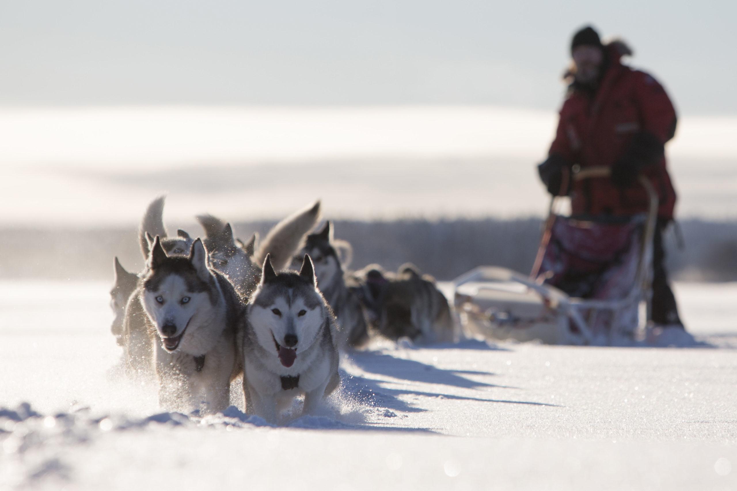 Im Hundeschlitten durch den hohen Norden