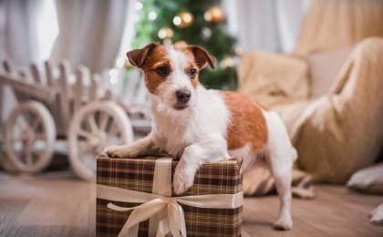 Als Familienmitglied bekommen selbstverständlich auch die vierbeinigen Lieblinge ein Geschenk zu Weihnachten.