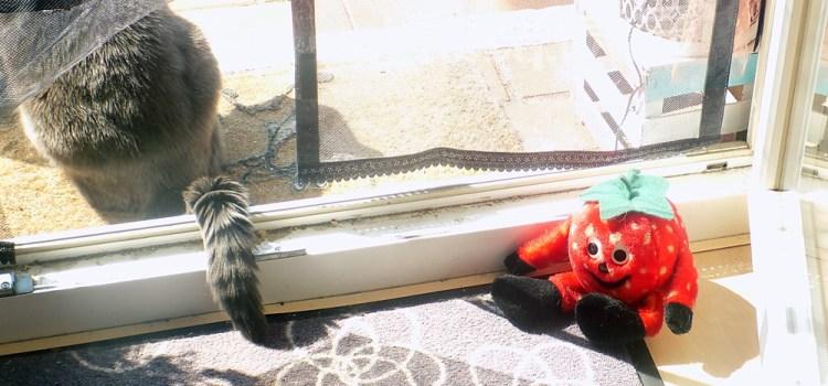 Katzenjammer durch Türenknallen