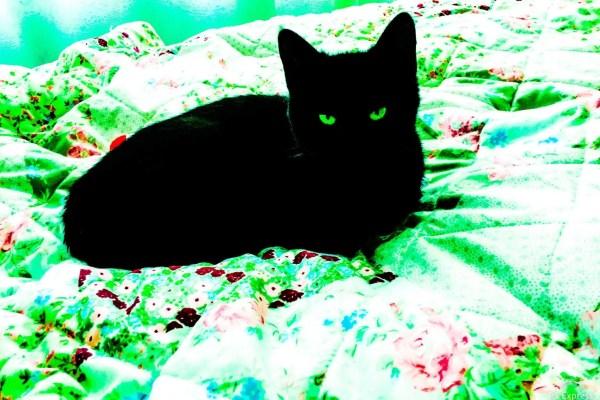 Was tun, wenn die Katze etwas Giftiges gefressen hat?