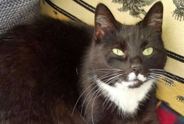 katzenschutzbund vermittelt