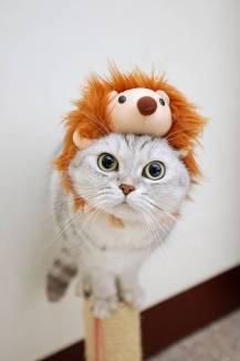 cat1 (1)