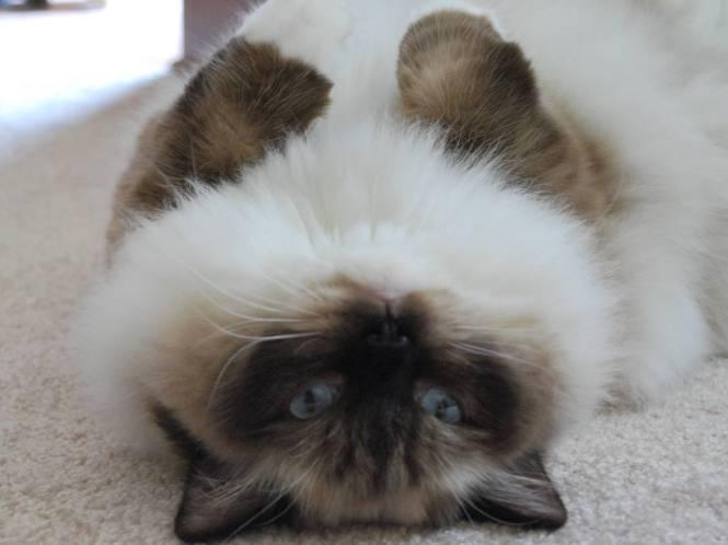 cute cat 3