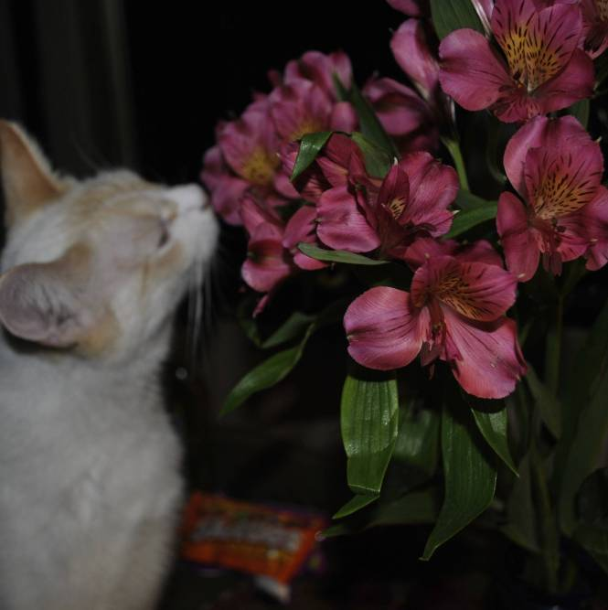 bailey smelling the flowers