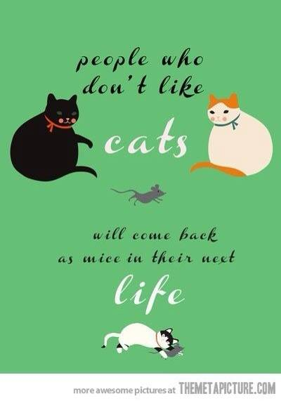 cats and mice