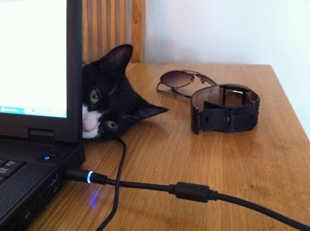 Oliver behind laptop