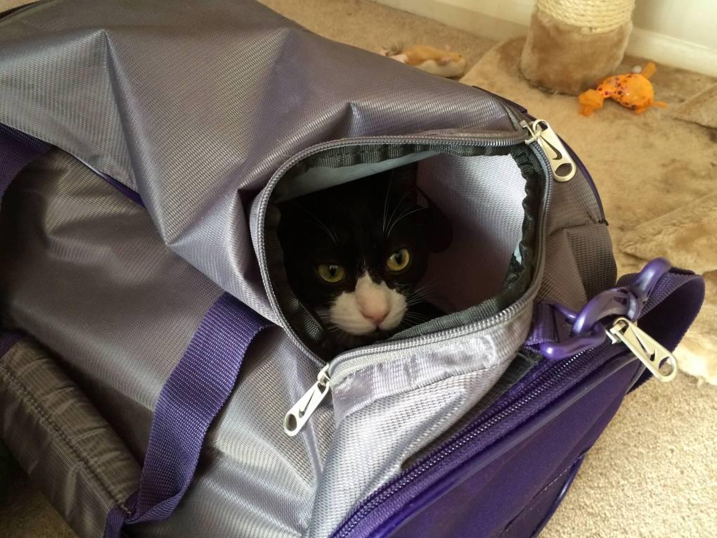 Oliver cat in Sport bag