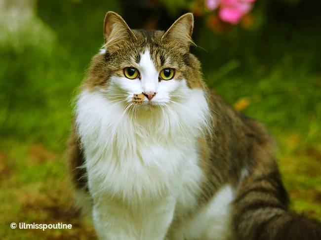 kitty-looks-solemn