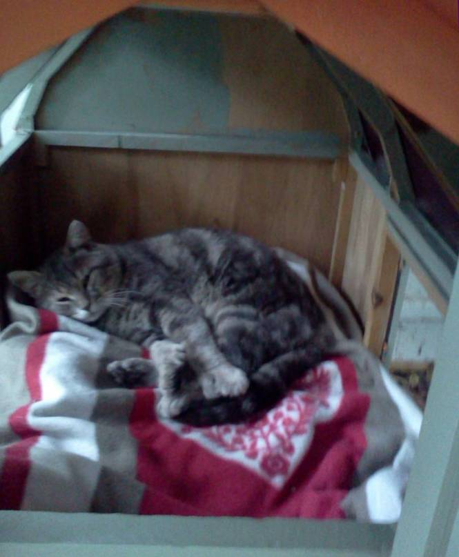 merlin in his house