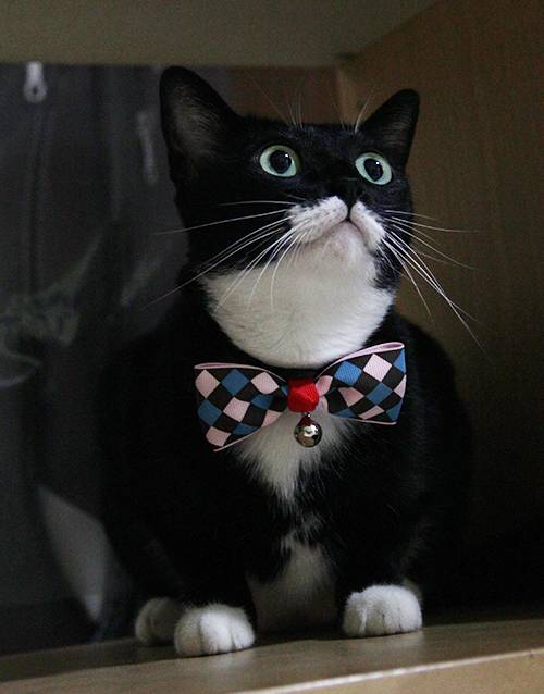 Adjustable-Cat-Bow-Tie-with-Bell-Brown-with-Pink-Blue-Check01