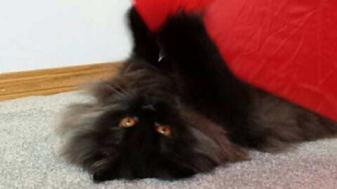 Angel's eyes cat umbrella 3
