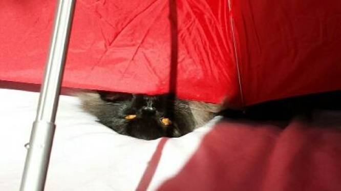 Angel's eyes cat umbrella 5