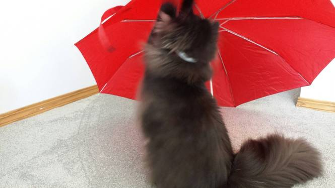 Angel's eyes cat umbrella 6