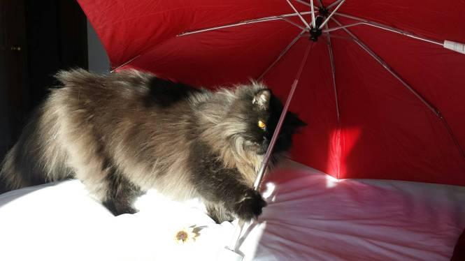 Angel's eyes cat umbrella 8