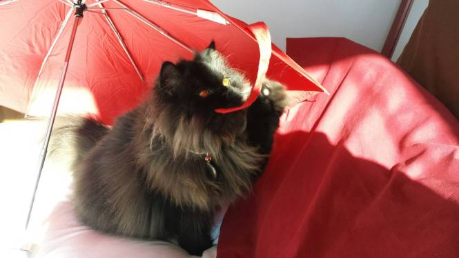 Angel's eyes cat umbrella 9