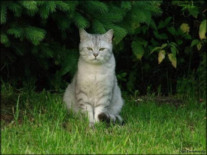 Cat Pic 1