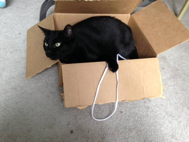 Friendly in box with string