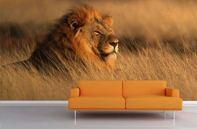 Lion-Wall-Murals-Room