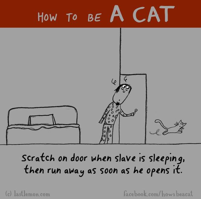 How to be a cat 1