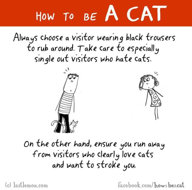 How to be a cat 2