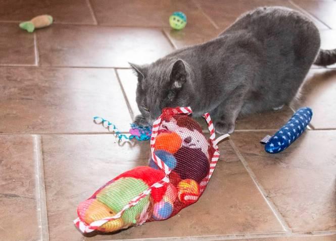 Cat stkg 1