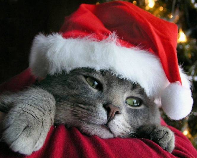 christmas cat wallpapers 5