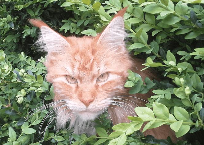 Rudd Kaiser cat photo