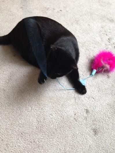 Friendly and Feather Toy
