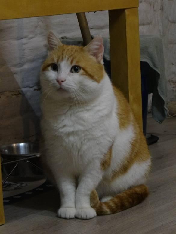 herbert_cat_rescue