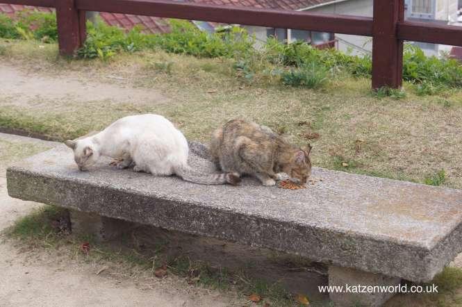 Cats of Onomichi