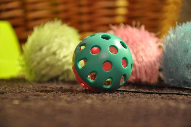 Does your cat need a toy-tervention.2