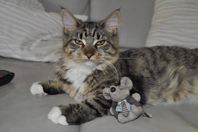 Does your cat need a toy-tervention.docx