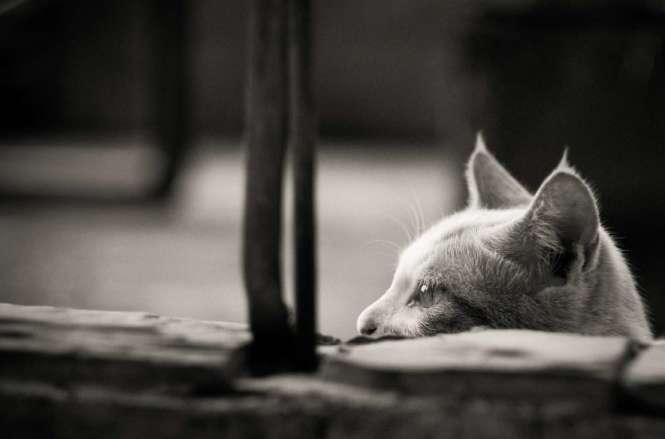 Should I get another cat or dog FOR KATZENWORLD_html_17a48d54-1