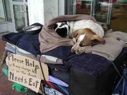 Homeless cat and dog by Tim Hulsizer 100 dpi web