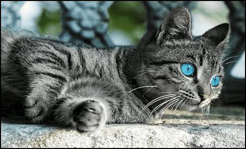 cat pinterest 2
