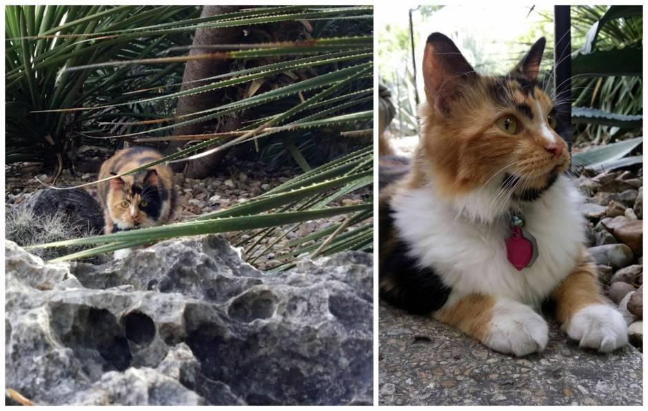 Bella, The Alamo Cat