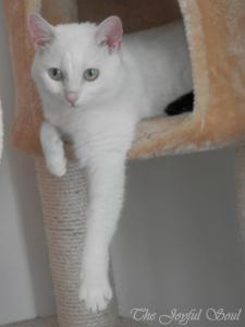 Lola's hanging around