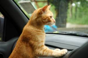 cat travel