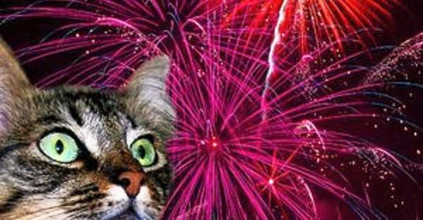 FIREWORKS-Cat