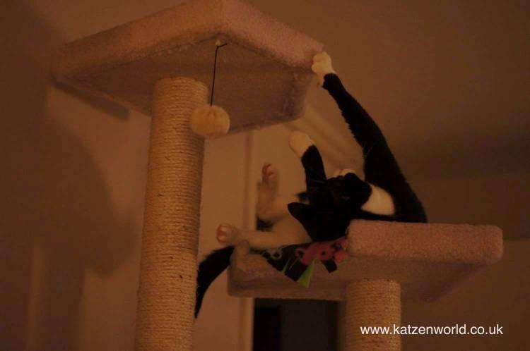 Oliver on tree