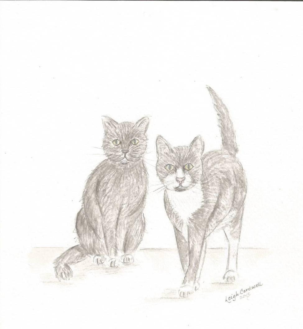 marc cats