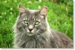 cat ear tip17