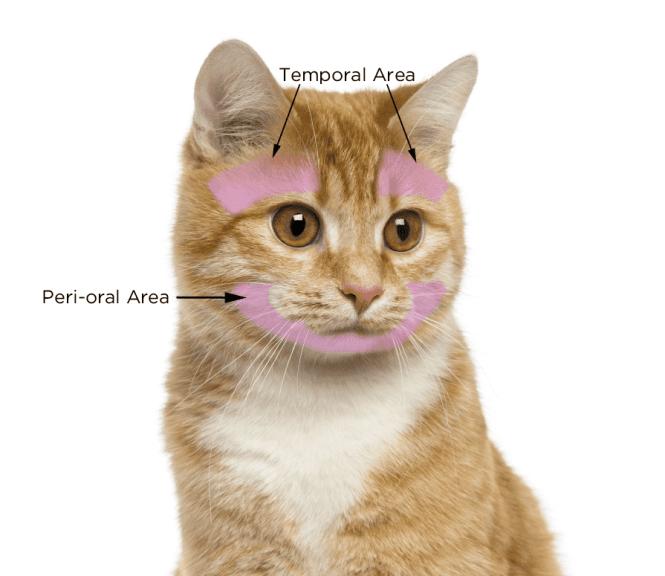 Cat Handling.docx