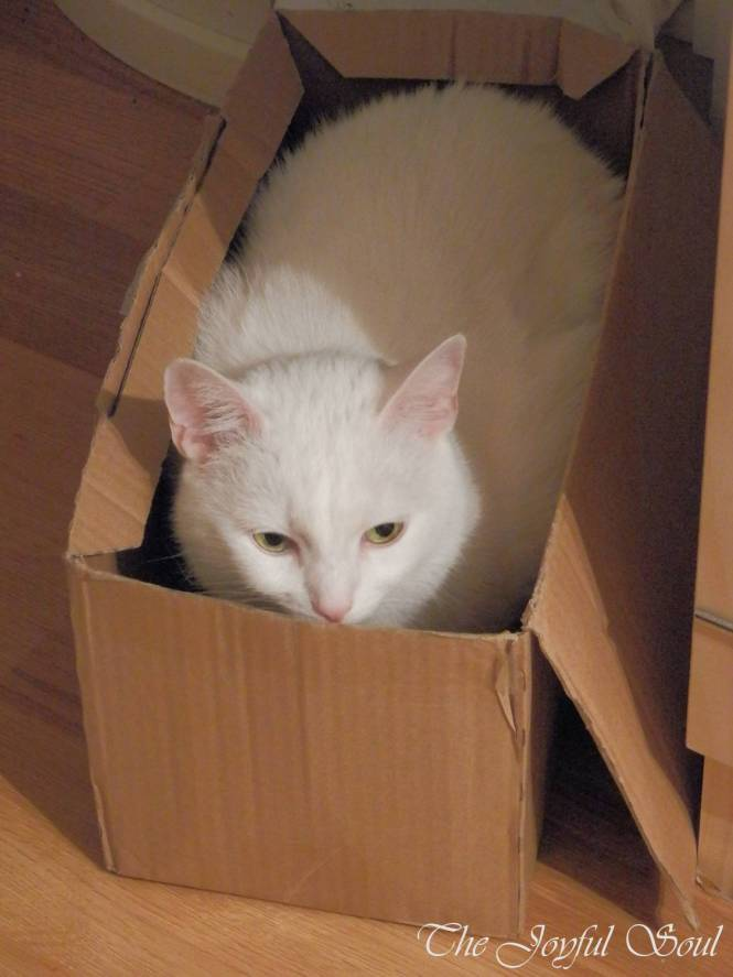 Box Lola
