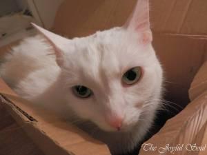 Box Lola is Unimpressed