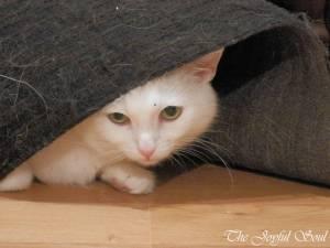 Lola under the mat 3