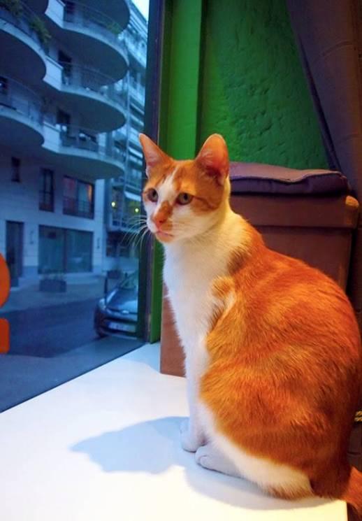 le chat touille 4
