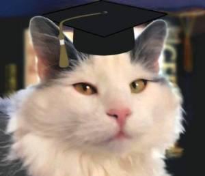 Pawfewssor Loki brings his years of feline wisdom to the clawsroom.