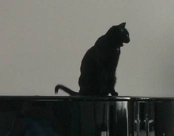 5 Friendly on piano singing